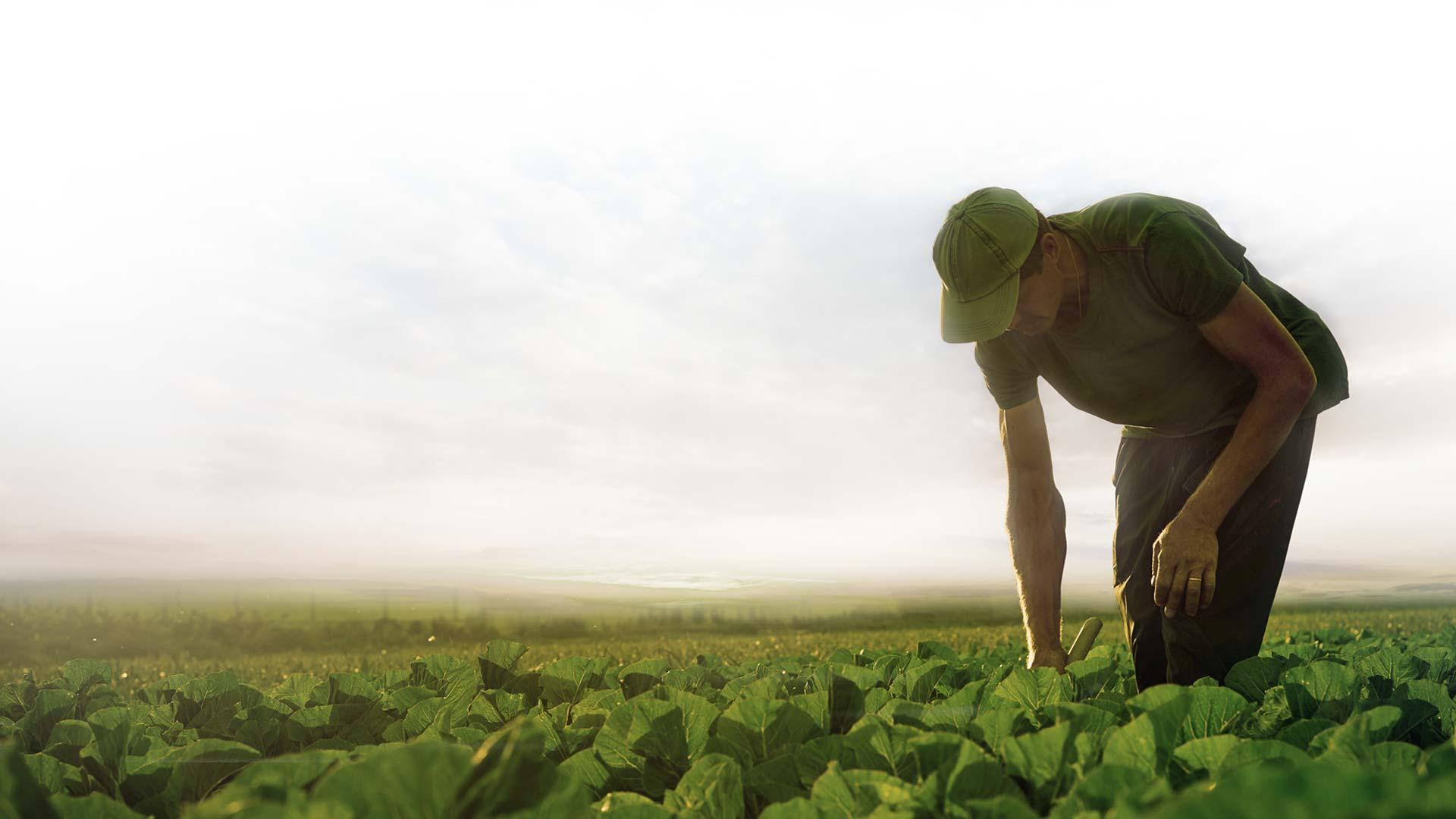 Trabajador campo Frutos Los Pisaos