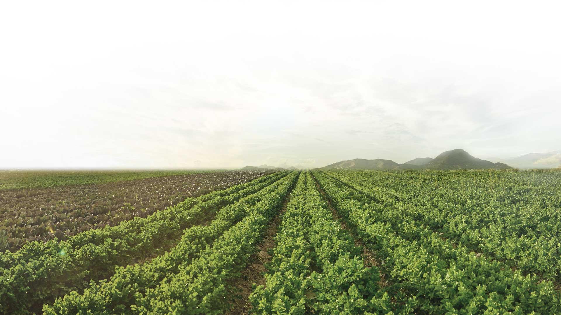 Fincas ecológicas de Frutos Los Pisaos